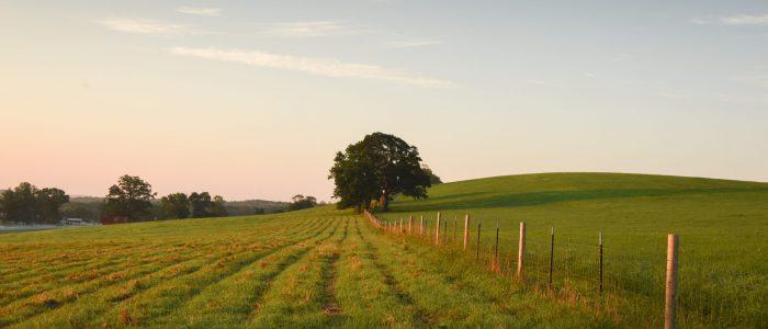 Image showing sunrise on Horsebarn Hill.