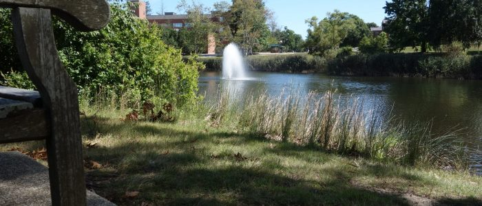 Fountain on Swan Lake, summer, UConn Storrs Campus.