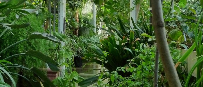 An image of inside the EEB Greenhouses