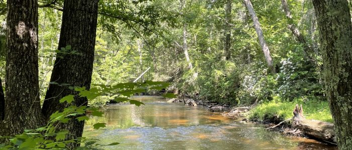 Mt. Hope River