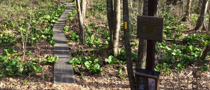Entry to Dunham woods.
